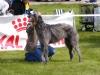 dog-club-pics-016