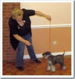 Puppy Winner Sept 2013