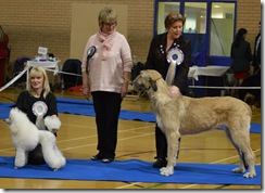 2015 ESSEX TOP DOG PUPPY WINNERS