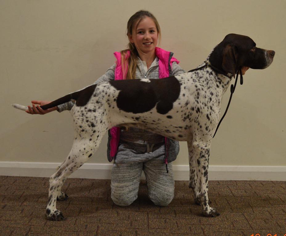 Dog Training Wickford